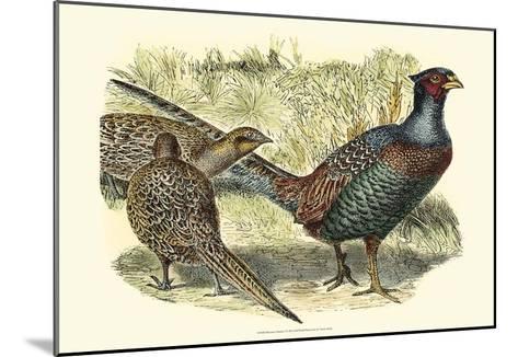 Pheasant Varieties I--Mounted Art Print
