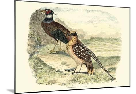 Pheasant Varieties IV--Mounted Art Print