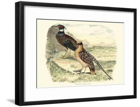 Pheasant Varieties IV--Framed Art Print