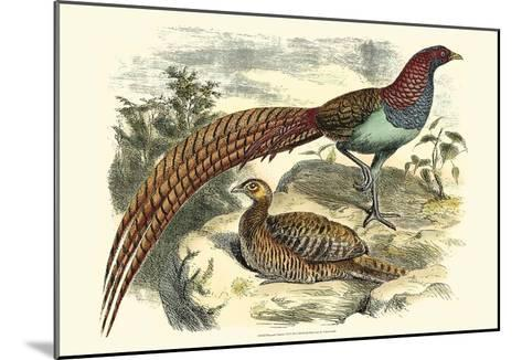 Pheasant Varieties VII--Mounted Art Print