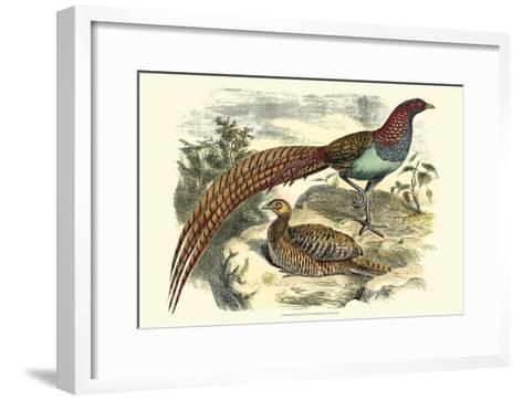 Pheasant Varieties VII--Framed Art Print