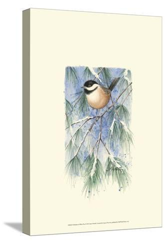 Chickadee in White Pine-Janet Mandel-Stretched Canvas Print
