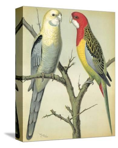 Cassell's Parrots I-Cassell-Stretched Canvas Print