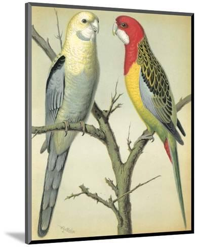 Cassell's Parrots I-Cassell-Mounted Art Print