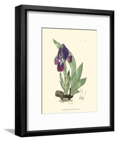 Elegant Iris I-Samuel Curtis-Framed Art Print