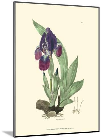 Elegant Iris I-Samuel Curtis-Mounted Art Print
