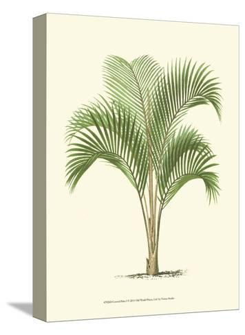 Coastal Palm I--Stretched Canvas Print