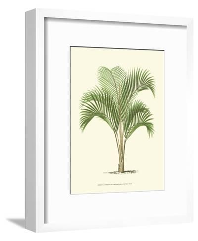 Coastal Palm I--Framed Art Print