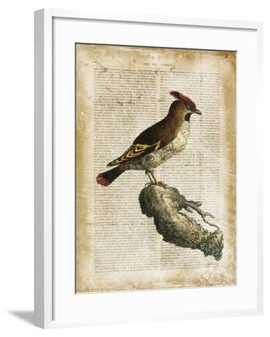 Antiquarian Birds III--Framed Art Print