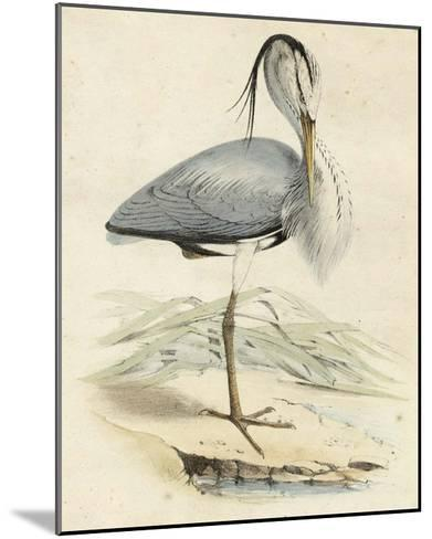 Antique Heron IV--Mounted Giclee Print