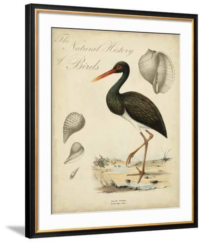 Heron Anthology I--Framed Art Print