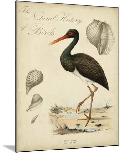 Heron Anthology I--Mounted Giclee Print