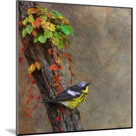 Magnolia Warbler-Chris Vest-Mounted Art Print
