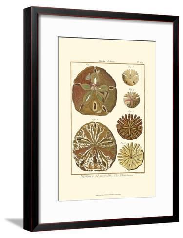 Sand Dollars III-Diderot-Framed Art Print