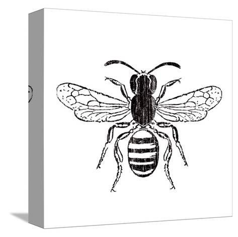 Bee-Clara Wells-Stretched Canvas Print