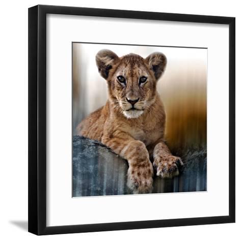 Cub-Bobbie Goodrich-Framed Art Print