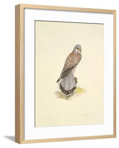 Kestrel-C.T.N. Ackland-Framed Art Print