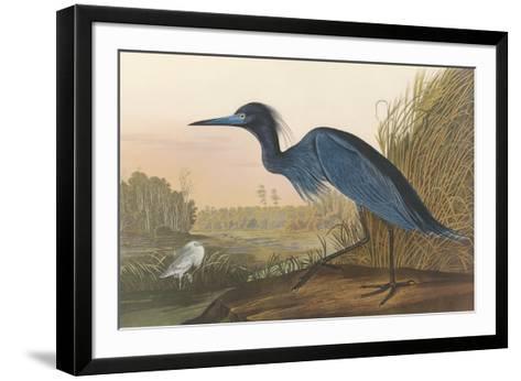 Blue Crane-John James Audubon-Framed Art Print