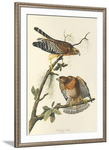 Red Shouldered Hawk-John James Audubon-Framed Art Print