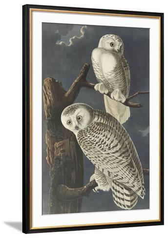 Snowy Owl-John James Audubon-Framed Art Print