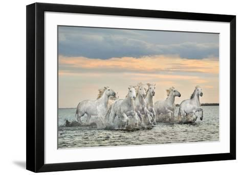 Camargue Horses - France-Xavier Ortega-Framed Art Print