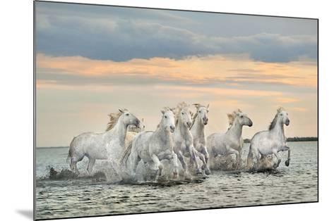 Camargue Horses - France-Xavier Ortega-Mounted Art Print