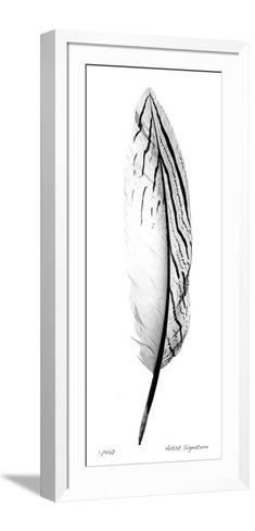 Feather II-Anthony Tahlier-Framed Art Print