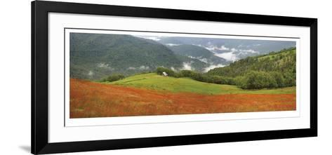 Redwood Forest Panorama-Donald Paulson-Framed Art Print