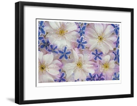 Floating Flowers-Donald Paulson-Framed Art Print