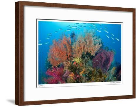 Sea Fans and Schooling Fusiliers-Jones-Shimlock-Framed Art Print