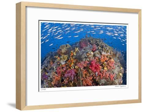 Reef Scenic 6-Jones-Shimlock-Framed Art Print