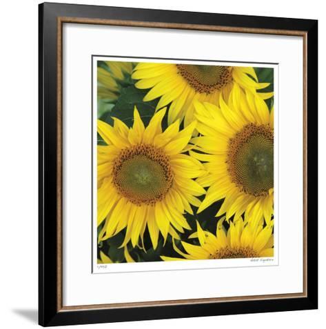 Sunflower Square-Stacy Bass-Framed Art Print