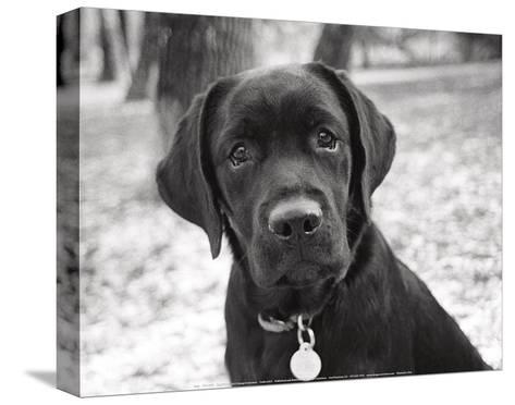Zoey-Kim Levin-Stretched Canvas Print