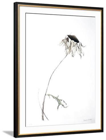 Dry Daisy-Paul Jansen-Framed Art Print