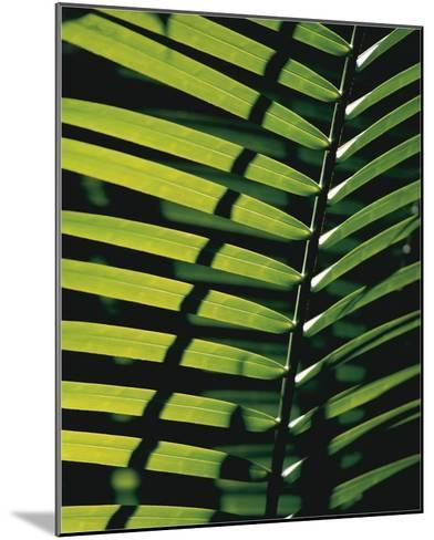 Tropicale-Catherine Thurel-Mounted Art Print