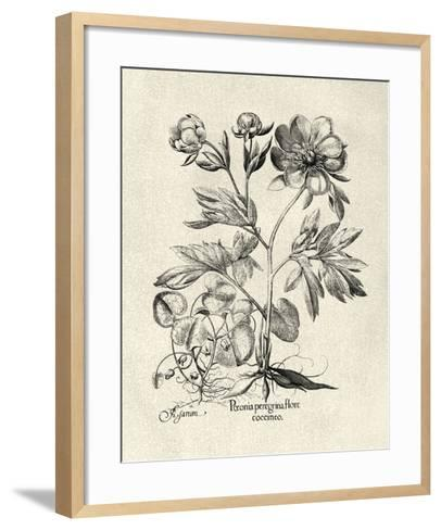 Crackled B&W Besler Peony III-Besler Basilius-Framed Art Print