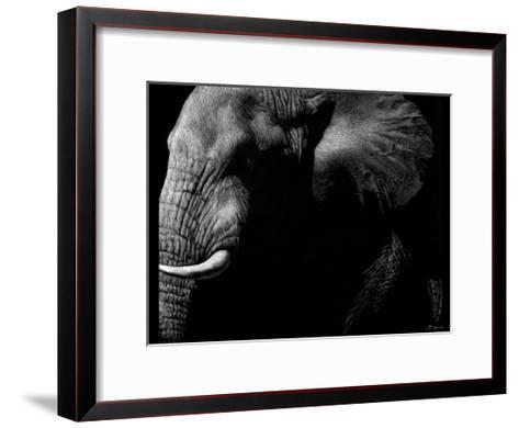 Wildlife Scratchboards III-Julie Chapman-Framed Art Print