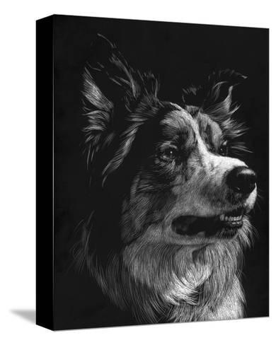 Canine Scratchboard IV-Julie Chapman-Stretched Canvas Print