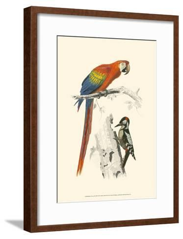 Birds of Costa Rica III-M^ Charles D'Orbigny-Framed Art Print