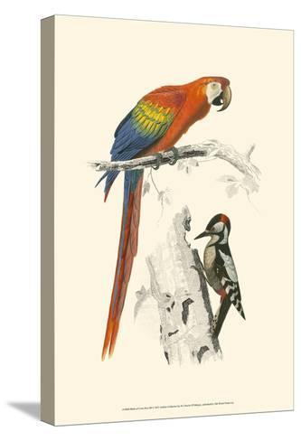 Birds of Costa Rica III-M^ Charles D'Orbigny-Stretched Canvas Print