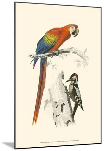 Birds of Costa Rica III-M^ Charles D'Orbigny-Mounted Art Print