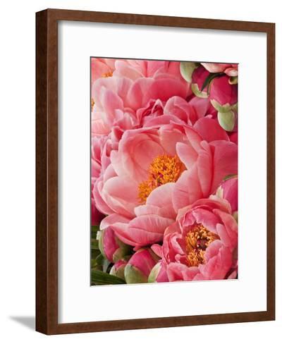 Coral Peonies II-Rachel Perry-Framed Art Print