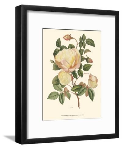 Vintage Roses IV--Framed Art Print
