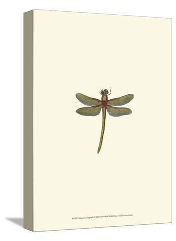 Miniature Dragonfly II--Stretched Canvas Print