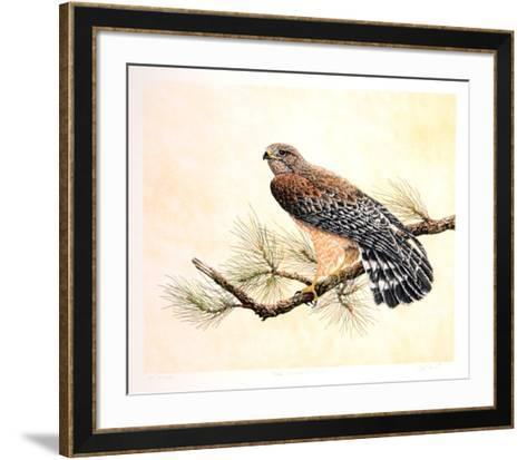 Red Shouldered Hawk-Chris Forrest-Framed Art Print