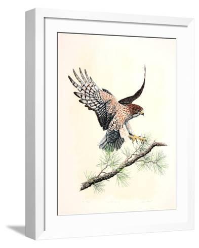 Redtail Landing-Chris Forrest-Framed Art Print