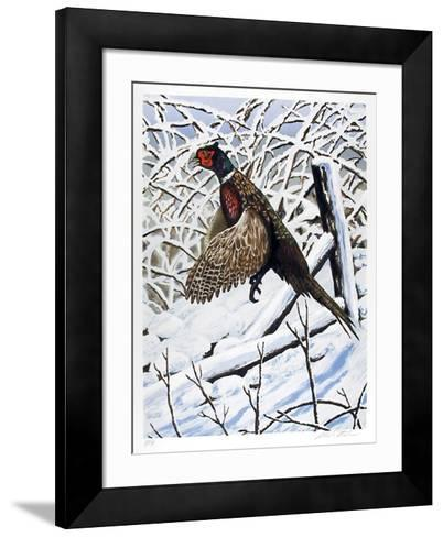 Ringnecked Pheasant-Allen Friedman-Framed Art Print