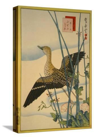 Snipe, Smooth Cane and Morning Glory-Sugakudo-Stretched Canvas Print