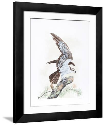 Osprey-Chris Forrest-Framed Art Print