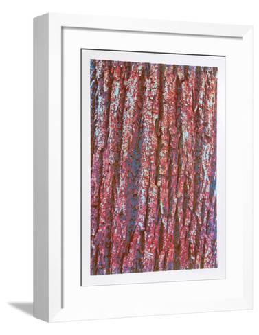 Tree Bark-Max Epstein-Framed Art Print